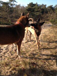 handleiding om te kiezen welke hond bij je past
